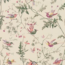 100/14071.CS Hummingbirds Original Multi-Colour by Cole & Son